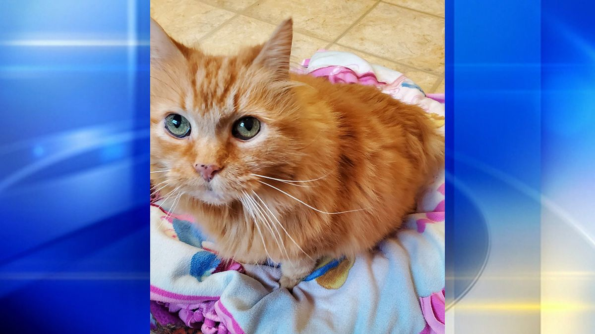 Anonymous Donor Pays for Sick Cat's Special Food for Life