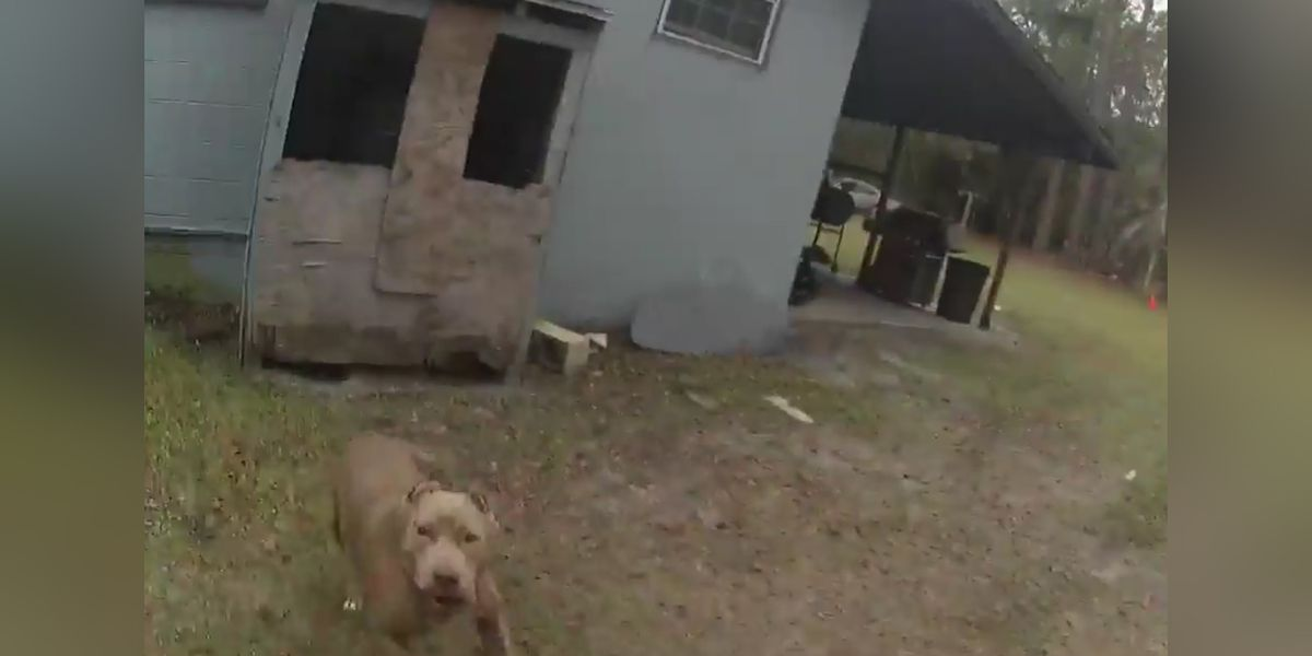 Police release body camera footage of officer shooting homeowner's dog