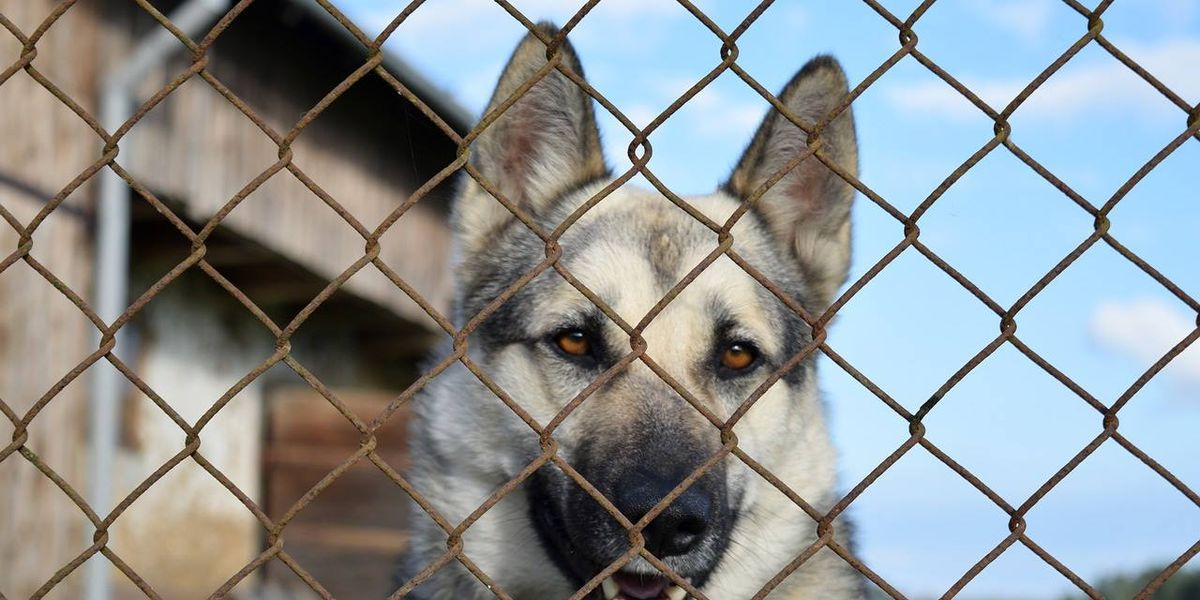 Iowa volunteers locked up in kennels with dogs to highlight lives of shelter animals