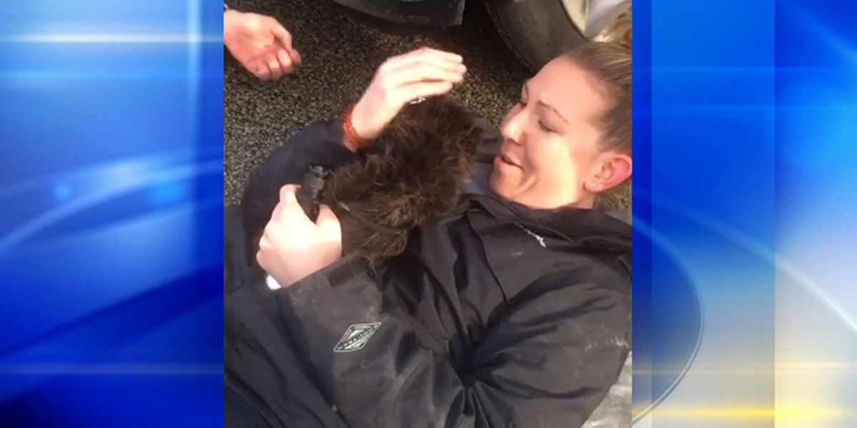 WATCH: Allegheny County CSI rescue kitten stuck in grill of car