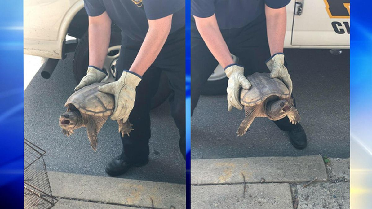 Police rescue large turtle from Lawrenceville intersection