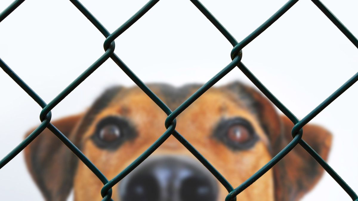 Heartbreaking photo of dog after being surrendered to shelter goes viral