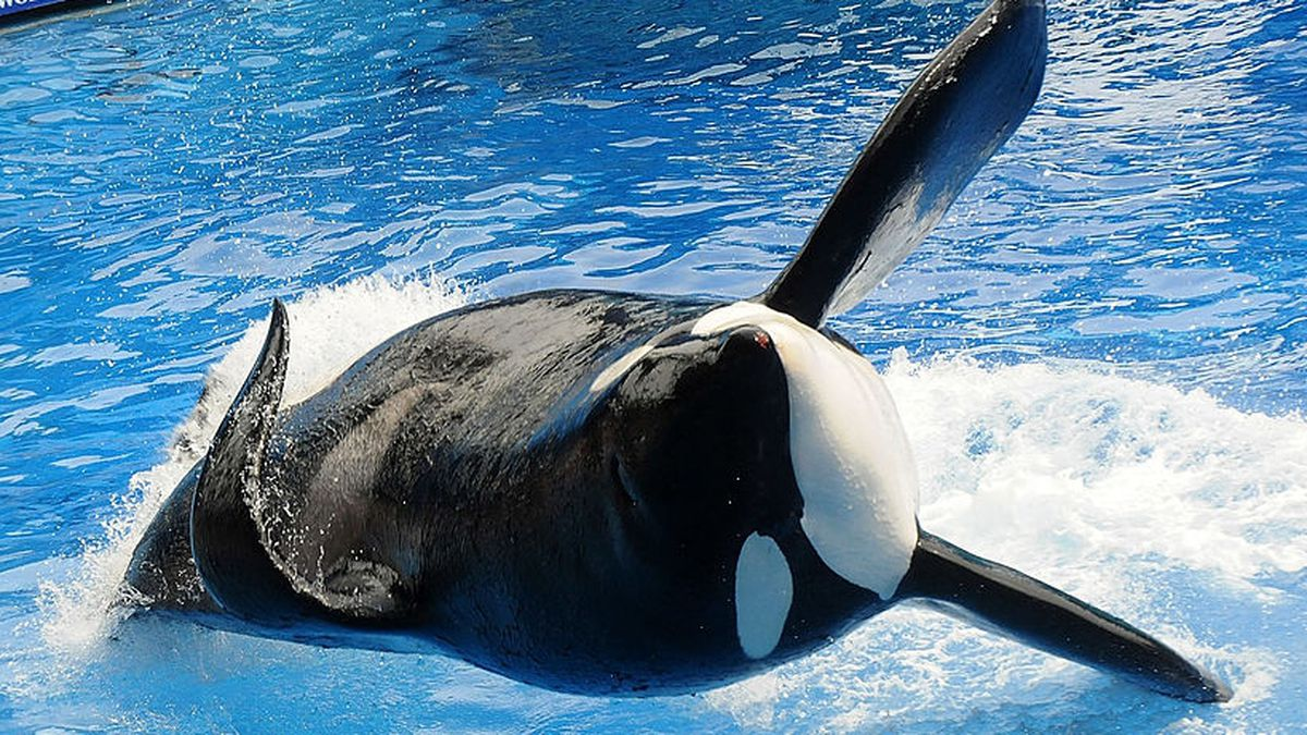 SeaWorld Orlando to change One Ocean killer whale show by end of year, officials say
