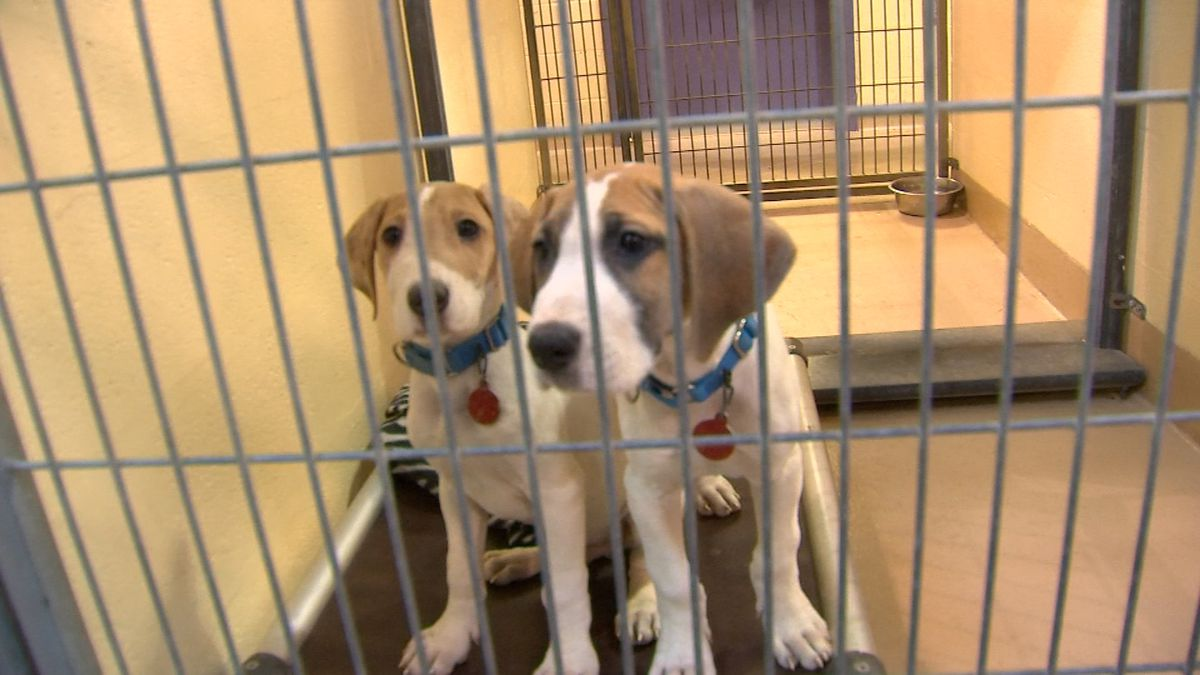 Animal Friends to offer a drive-thru pet food distribution event on April 11
